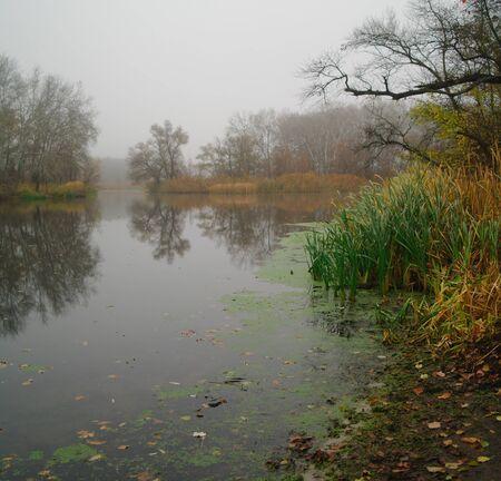 Paisaje de río y madera otoñal.