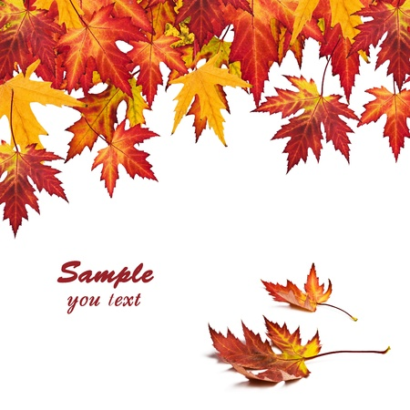 Autumn card of colored leafs photo