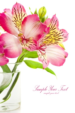 bouquet of pink flowers  Stock Photo