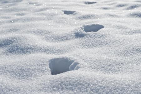 animal tracks: tracce di animali nella neve Archivio Fotografico