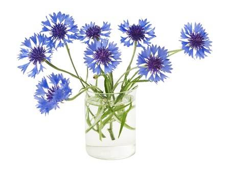 bouquet of cornflowers isolated on white background Stock Photo - 15072169
