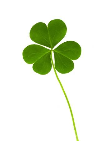 groene klaver symbool van een St Patrick dag op een witte achtergrond Stockfoto