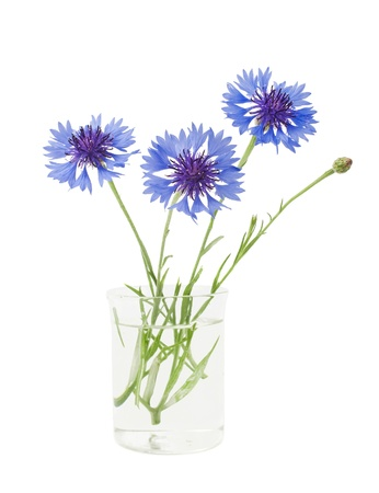 bouquet of cornflowers isolated on white background Stock Photo - 15225360