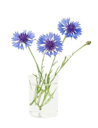 bouquet of cornflowers isolated on white background Stock Photo - 15225360