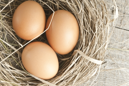 chicken egg: Macro shoot of brown eggs at hay nest in chicken farm