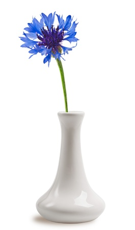 Cornflower in the vase photo