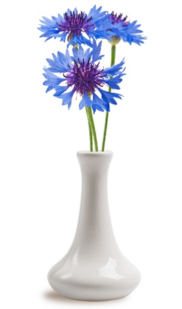 Cornflowers in the vase photo