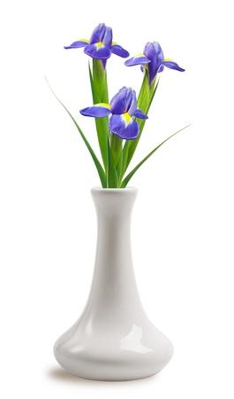Beautiful bright irises in vase on White Background photo