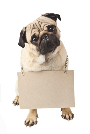 Close-up of Pug with a sign