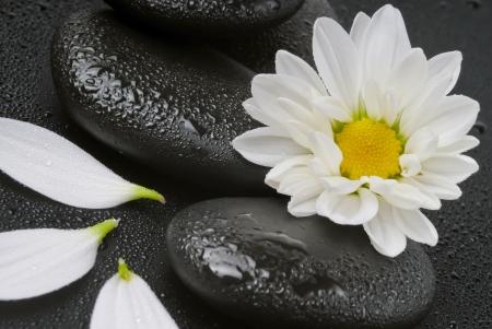 Spa stilleven met witte bloemen