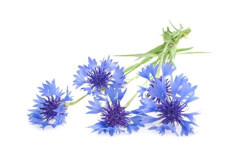 Beautiful blue cornflower isolated on white background Stock Photo - 17969284