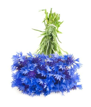 Beautiful blue cornflower isolated on white background Stock Photo - 17138124