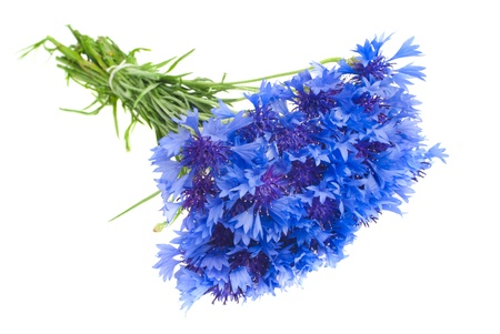 Beautiful blue cornflower isolated on white background Stock Photo - 17272145
