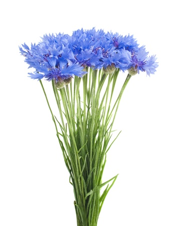 Beautiful blue cornflower isolated on white background Stock Photo - 17138122