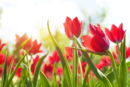 Beautiful spring flowers  in soft focus  photo