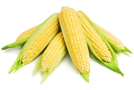 An ear of corn isolated on a white background photo