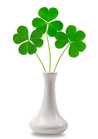 green clover symbol of a St Patrick day photo