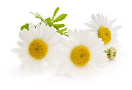 daisy stem: Beautiful daisy isolated on white background Stock Photo