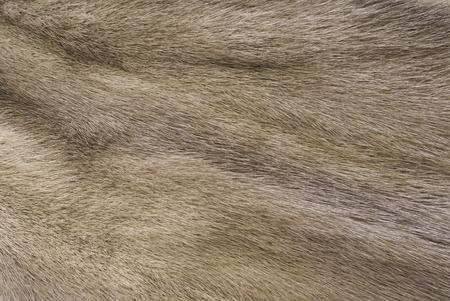 mink: Mink fur