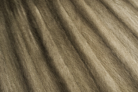 nerts: Mink bont