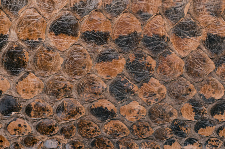 constrict: snake skin texture as a background