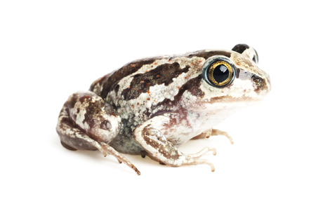repulsive: Close-up of a toad on a white background