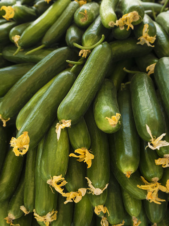 cylindrical: Ripe cucumbers and blossom of cucumber. Time of harvest. Healthy food. Agricultural concept. Bright vegetables background. (Selective Focus)