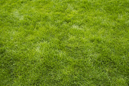 Grass texture, summer lawn background. Green freshly mown grass, copy space, backdrop