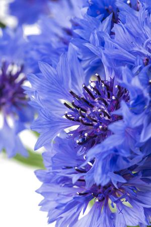 Bouquet of blue cornflowers isolated on white 版權商用圖片