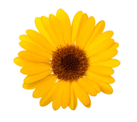 Calendula. Marigold flower with leaves isolated on white. Selective focus