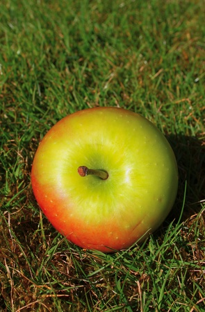 A fresh apple in the green grass