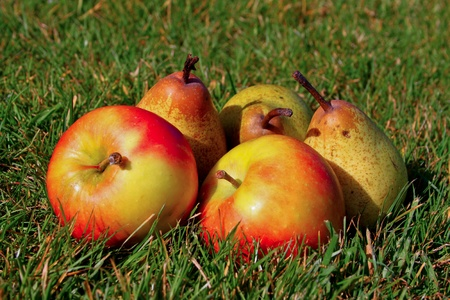 Fresh apples and pears in green grass