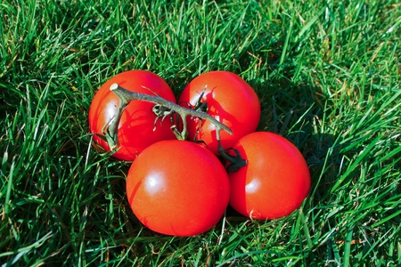 A heap of red ripe tomatoes over the green grass