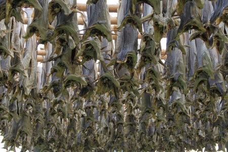 Dried Stock Fish - Traditional way of drying stock fish on Lofoten islands in Norway Stock Photo