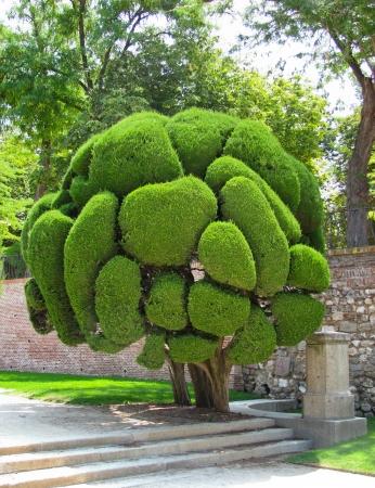 Cypress tree in Retiro Park in Madrid, Spain Stock Photo