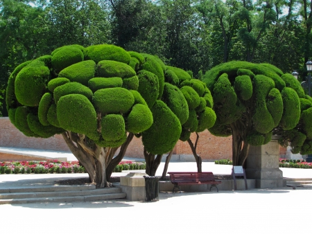 Outstanding cypress trees in Retiro Park in Madrid Spain Stock Photo