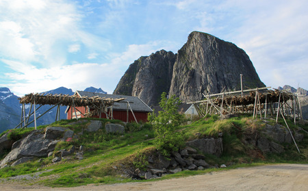 Natural drying of stockfish cod in Arctic fishing village of Lofoten Island in Norway Stock Photo