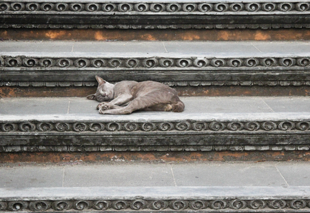 Cat lies on the stairs