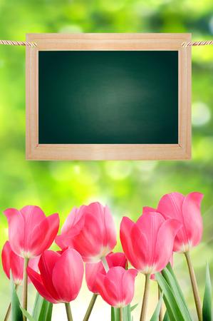 Le conseil scolaire et de tulipes sur un fond vert bokeh Banque d'images