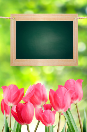 School board and tulips on a green background bokeh