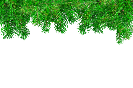 fir tree: Green Fir tree branches in white background.