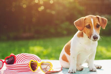 Dog basking in the sun soft focus. 版權商用圖片