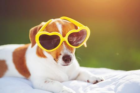 bask: Dog sunning in glasses, hidden eyes, soft focus.