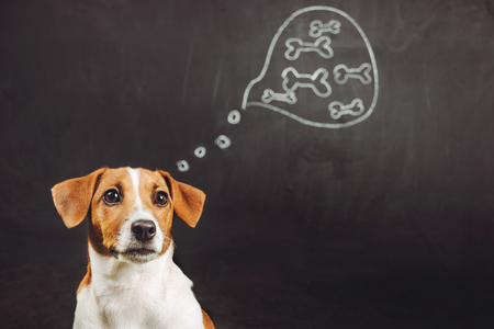 Puppy dog sitting and dreaming of natural food in a thought bubble near blackboard.