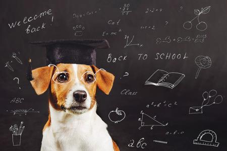 비문와 학교 보드 근처 안경 스마트 개. 교육 및 학습 개념입니다.