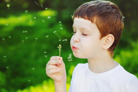 Little boy blowing dandelion. Stock Photo