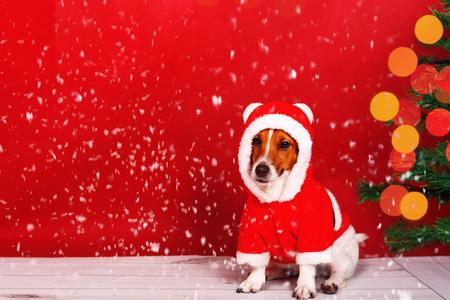 Santa dog near pine christmas tree. Falling snow. Holiday concept.