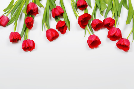 Tender red tulips flowers on light background. High top view.