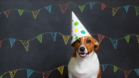 Cute dog in carnival party hat celebrating birthday on horizontal banner with space for text. Stockfoto