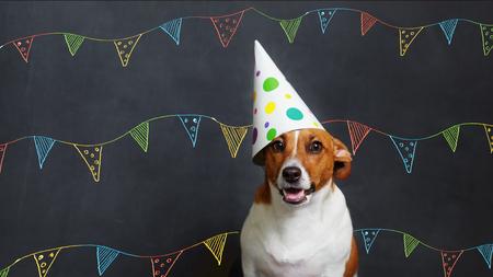 Perro lindo en el sombrero del partido del carnaval que celebra cumpleaños en la bandera horizontal con el espacio para el texto. Foto de archivo - 76848861